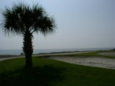 Palm tree at the Ocean - Fripp Island, SC 29920